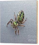 Jumping Spider - Green Salticidae Wood Print
