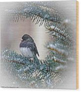 Junco In Pine Wood Print