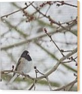 Junco In Snow Wood Print