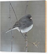 Junco In The Snow Wood Print