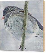 Junco On A Twig Wood Print