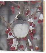 Junco Puffed Up On Crabapple Tree Wood Print