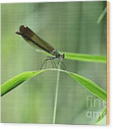 June Damselfly  Wood Print