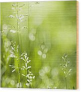 June Green Grass  Wood Print by Elena Elisseeva