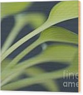 June Plantain Lily Close Ups Wood Print