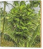 Jungle And Rice Field Wood Print