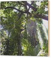 Jungle Canopy Wood Print