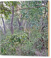 Jungle Forest In Chitwan Np-nepal Wood Print
