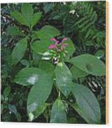 jungle in La Amistad National Park Panama 4 Wood Print