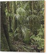 Jungle Leaves Wood Print