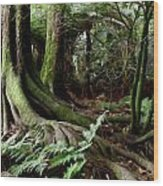 Jungle Trunks1 Wood Print by Les Cunliffe