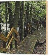 Jungle Walkway Wood Print