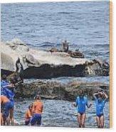 Junior Lifeguards And Sea Lions Wood Print