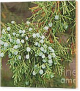 Juniper Berries Wood Print