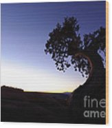 Juniper Tree At Dawn Wood Print