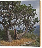 Juniper Tree On The Edge Of The Verde Valley Wood Print