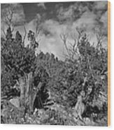 Juniper Trees At The Ghost Ranch Black And White Wood Print