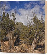 Juniper Trees At The Ghost Ranch Color Wood Print