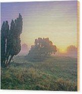 Juniper Trees In Early Morning Fog  Wood Print