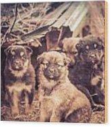 Junkyard Dogs Wood Print