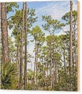 Ancient Looking Florida Forest At Aubudon Corkscrew Swamp Sanctuary Wood Print