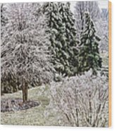Ice Coating Trees And Lawn In A Back Yard Wood Print