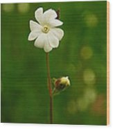 Just A Little White Flower Wood Print