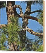 Just A Tangle Of Pine Tree Branches Wood Print