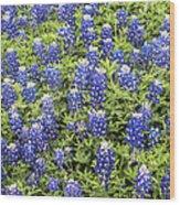 Just Bluebonnets Wood Print