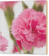 Just Carnations Wood Print
