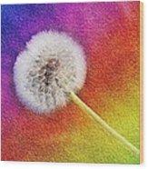 Just Dandy Rainbow 2 Wood Print