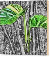 Just Green 2 By Diana Sainz Wood Print