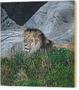 Just Lion Around Wood Print