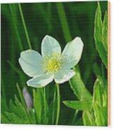 Just One Pretty Flower Wood Print