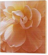 Just Peachy Begonia Flower Wood Print