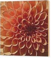 Just Peachy Dahlia Wood Print