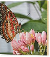 Just Pink Butterfly Wood Print
