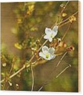 Just Two Little White Flowers Wood Print