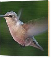 Juvenile Anna Hummingbird Wood Print