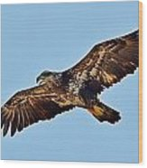 Juvenile Bald Eagle In Flight Close Up Wood Print
