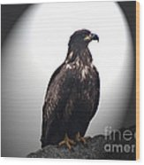 Juvenile Bald Eagle Year 1 Wood Print