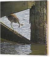 Juvenile Black Crowned Night Heron Wood Print