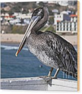 Juvenile Brown Pelican Wood Print