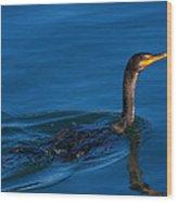 Juvenile Cormorant Swim Wood Print