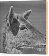 Juvenile Deer Close-up V2 Wood Print