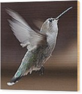 Juvenile Female Anna's Hummingbird In Flight Wood Print