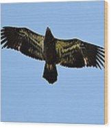 Juvenile Flight 8229 Wood Print