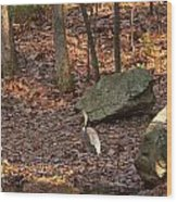 Juvenile Great Blue Heron  Wood Print