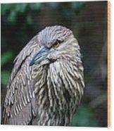 Juvenile Heron Wood Print