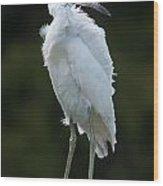 Juvenile Little Blue Heron On Sign Wood Print
